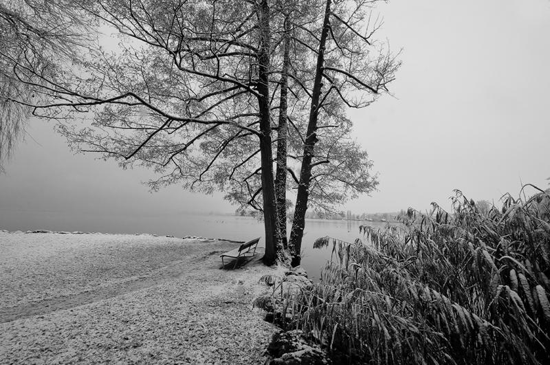 Wintermorgen im Villette-Park, Switzerland, Canton of Zug, Cham
