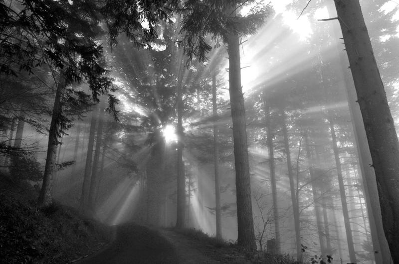 Mit Sonnenstrahlen durchflutender Wald / Switzerland , Canton of Zug, Gottschalkenberg