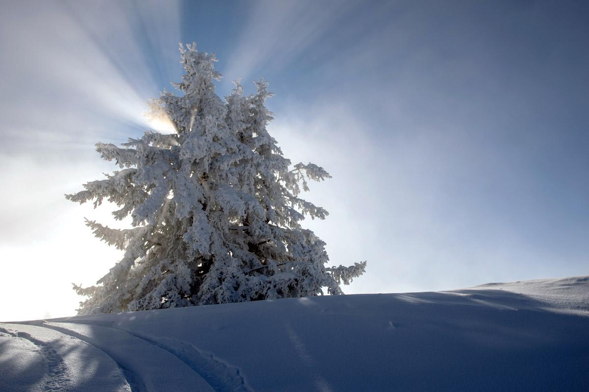 Winterauber_DSC_3916